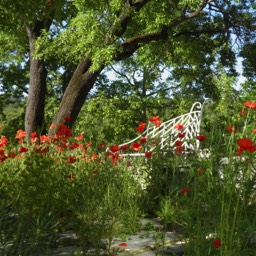 Borghetto Calcinaia: Poppies in the garden