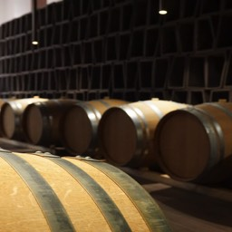 Antinori winery barrels